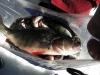 vikinganappet-2010-m-m-025-w700-h700.jpg